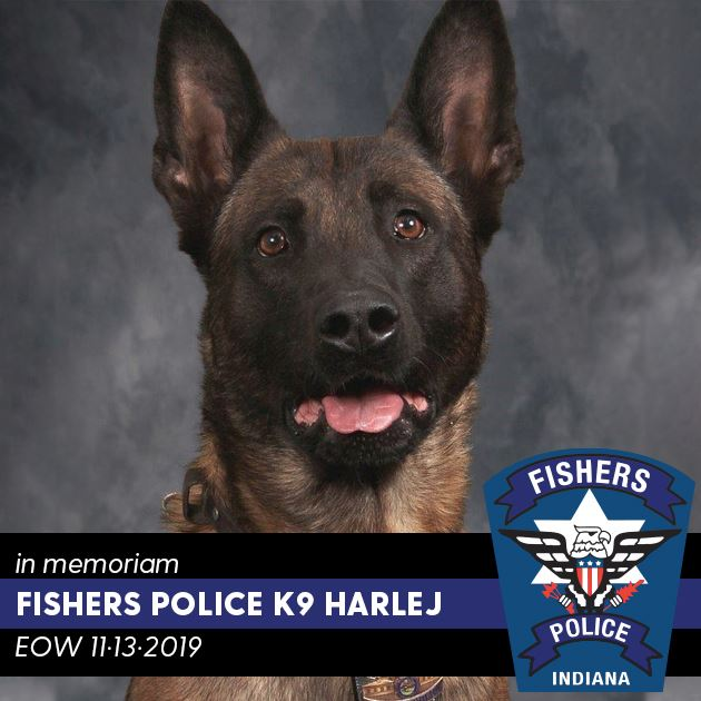In memorial Fishers Police K9 Harlej | EOW 11-13-2019